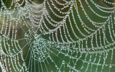 A Web Filled With Gratitude